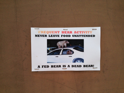 """A fed bear is a dead bear"" - image photographed June 2012"