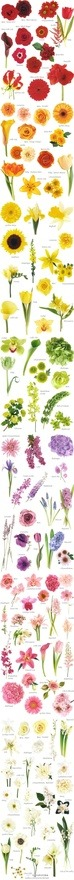 flower name and color chart, handy!