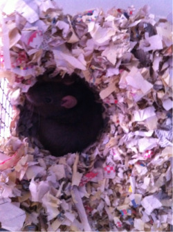 Trixie in her nest she built! :)