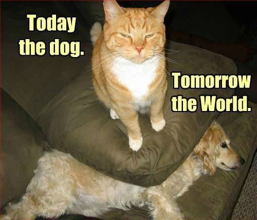 Today the dog…