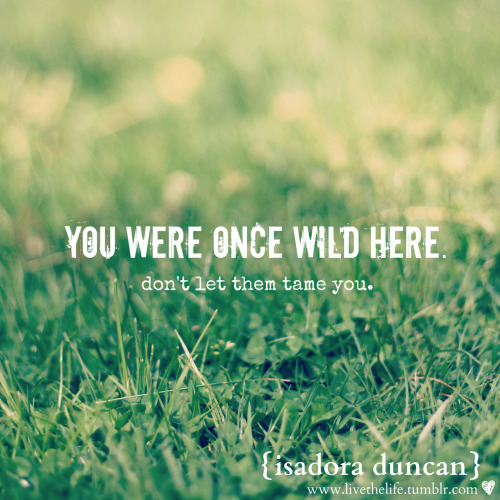 you were wild once.  you were young & free.  you knew no limits. stay wild.  stay free.   don't let them tame you.  don't let them change you. don't ever let anyone hold you down.