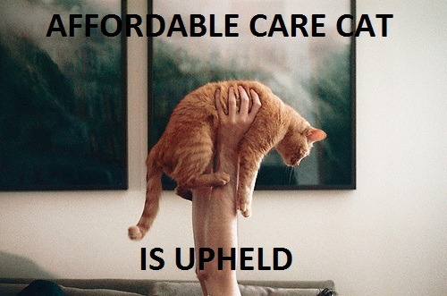 matthurst:  Affordable Care Cat celebrates health care reform and supreme court decisions with humor  LOVE THIS!!!