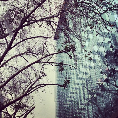 #Glass and #nature - #architecture #archdaily #instagood #iphonesia #abstract (Taken with Instagram)