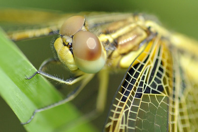Kathmandu, Nepal: A dragonfly in a garden.  Photograph: Prakash Mathema/AFP/Getty Images