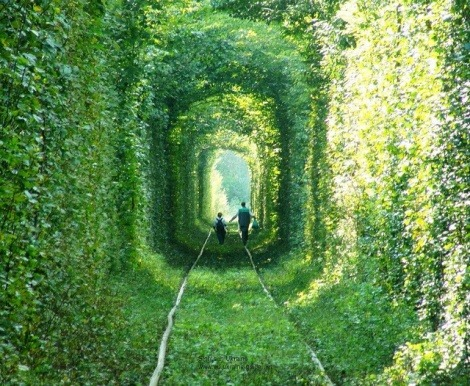 The beautiful irony of this train-carved tree tunnel in Ukraine? The train is carrying trees to a factory where they will be ground into fiberboard for Ikea furniture. (via Magical tree tunnel was carved out by a train | Grist)