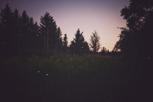My favorite time of year is marked by the return of fireflies.