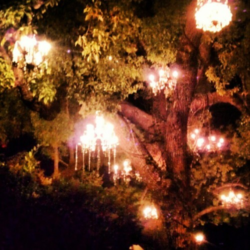 #Chandelier #tree #homedecor #lighting #art #love #dopeness #photoadayjune  #instagrammer  (Taken with Instagram)