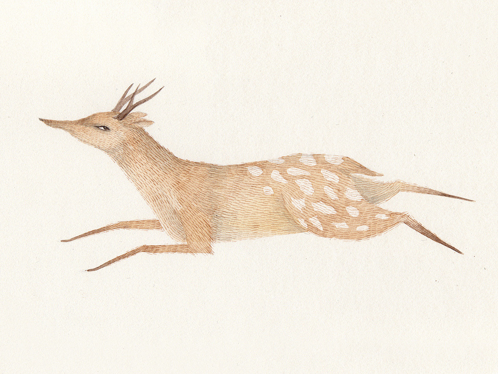 'deer'  Julianna Swaney
