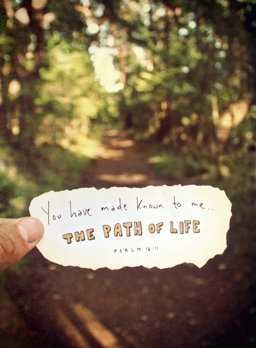 iwilltrustinyou:  227/365 the path of life (by God's fingerprints)