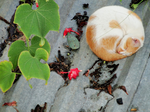 cybergata:  … and a perfect circle.  gatoseoutrosbichos:  Gato (Felis silvestris catus) (by Ronie Peterson)