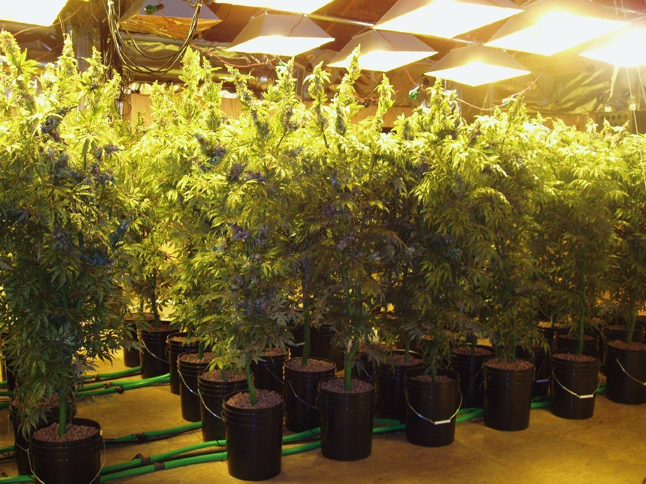 bl0winonmedicinal:  take a look at California's number one cash crop