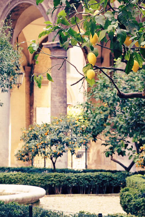 champagne:  doria pamphilj, courtyard detail, lemon trees, pottery, 2012 (digital)