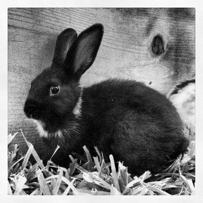 isawaglow:  Gorgeous #fuckyeahrabbits #oc #bunny #cute (Taken with Instagram)