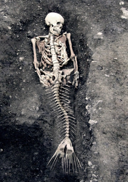 Mermaid bones.