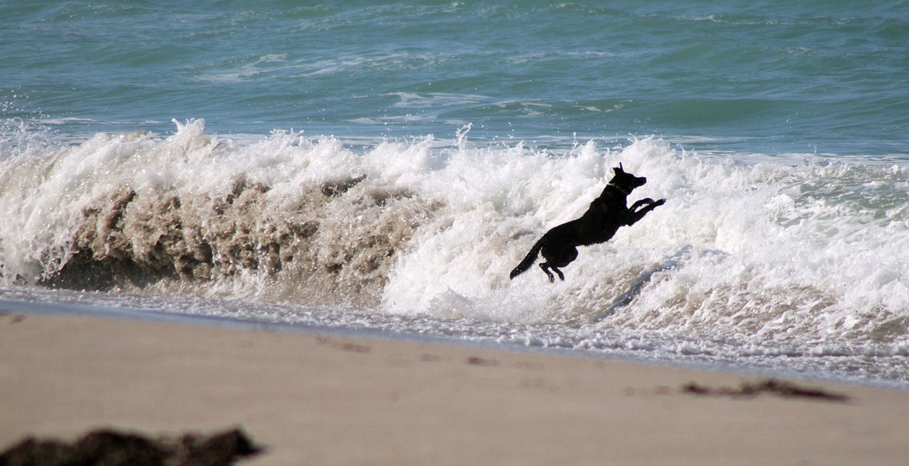 awesome dog jumping over the wave