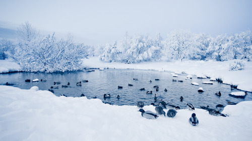 amariusque-admare:  Winter wonderland (viii) (by oskarpall)