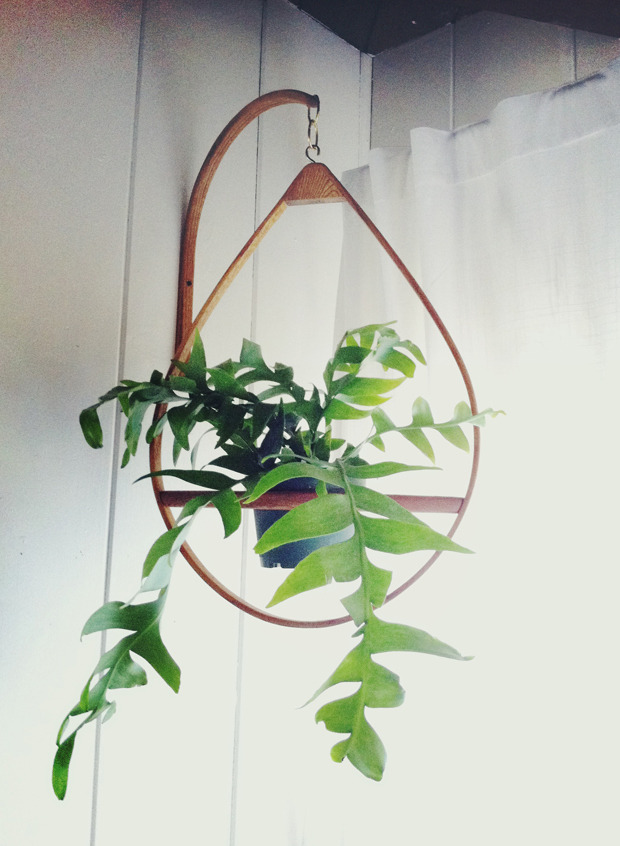 Mid Century plant hanger (photo by Justina Blakeney)