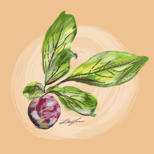 Plum This is probably the best digital painting I've ever made! Pretty happy with the way it came out especially since most of my digital art don't come out that well—mainly because I cannot choose colors at all. Luckily I was able to pick some decent colors this time. Plus I'm really liking this style as well!