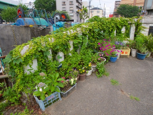 "Reclaim the sidewalk: make the neighborhood your garden! Informal structural greenspace in the form of an overgrown concrete railing provides a nice backdrop for a public private garden in the middle of Nagoya, Japan. The flower pots also seem to turn the spontaneous overgrowth into ""purposeful"" greenspace, recognised and cherished."