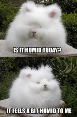 http://www.letssmiletoday.com/pictures/12931-humidity-problems