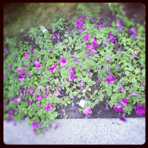 Wake up and smell the flowers <3 (Taken with Instagram)