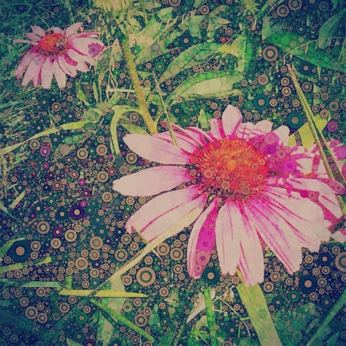 Percolated flowers #highlinepark #percolator #app  (Taken with Instagram at High Line Park)