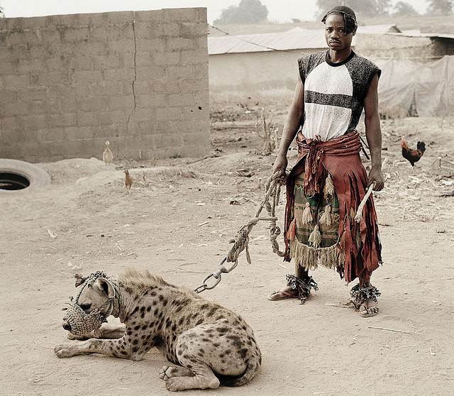 themaxdavis:  hyena pet by smashingplumpkin on Flickr.