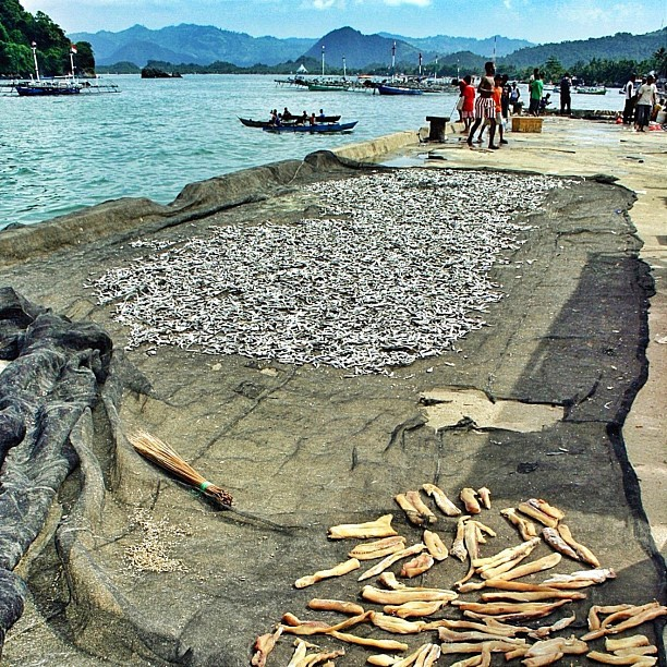 Salty fishes in traditional drying process at Hamadi fish landing site, Jayapura. #photography #travel #papua #indonesia #iamdreamcatcher #blue_IND   (Taken with Instagram)