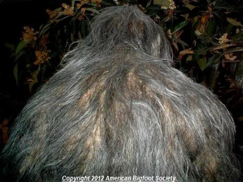 """EMom, how has bigfoot eluded capture for so long?"" Some theories as to why Bigfoot hasn't been found: he stands upright, and easily blends in with trees; he's really good at hiding; he buries his dead; and because we're not looking hard enough.http://www.myemom.com/?s=How+has+bigfoot+eluded+capture+for+so+long"