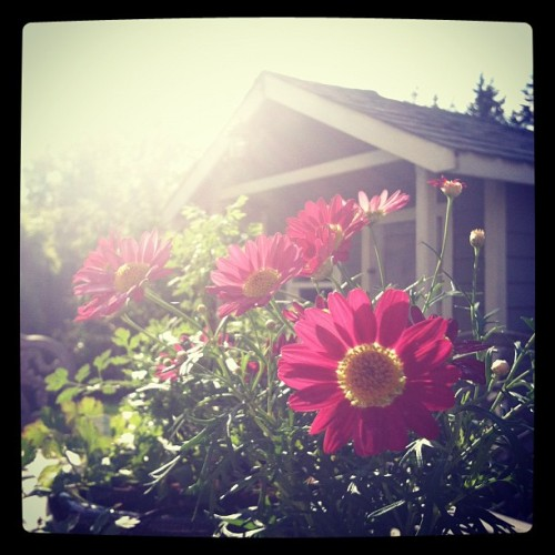 Sun! (Taken with Instagram at Casa de Johnson)