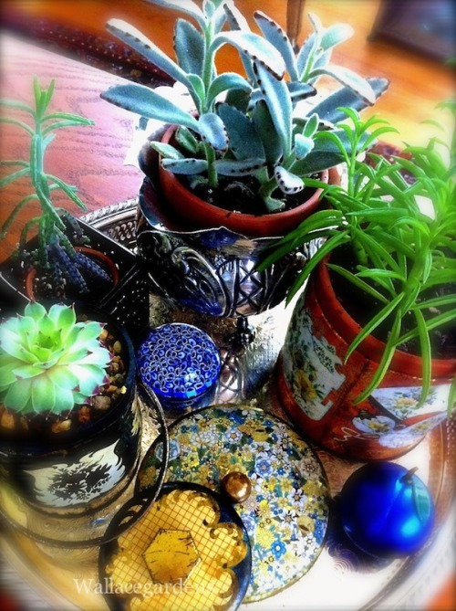Repurposed objects: candy tin succulent gardens on a vintage tray.