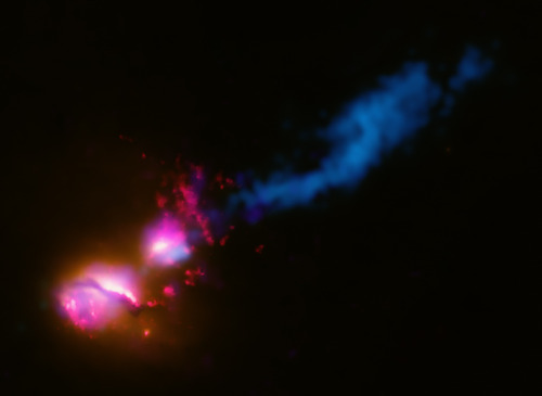 "This composite image shows the jet from a black hole at the center of a galaxy striking the edge of another galaxy, the first time such an interaction has been found. In the image, data from several wavelengths have been combined. X-rays from Chandra (colored purple), optical and ultraviolet (UV) data from Hubble (red and orange), and radio emission from the Very Large Array (VLA) and MERLIN (blue) show how the jet from the main galaxy on the lower left is striking its companion galaxy to the upper right. The jet impacts the companion galaxy at its edge and is then disrupted and deflected, much like how a stream of water from a hose will splay out after hitting a wall at an angle. Each wavelength shows a different aspect of this system, known as 3C321. The Chandra X-ray image provides evidence that each galaxy contains a rapidly growing supermassive black hole at its center. Hubble's optical light images (orange) show the glow from the stars in each galaxy. A bright spot in the VLA and MERLIN radio image shows where the jet has struck the side of the galaxy - about 20,000 light years from the main galaxy - dissipating some of its energy. An even larger ""hotspot"" of radio emission detected by VLA (seen in an image with a much larger field-of-view) reveals that the jet terminates much farther away from the galaxy, at a distance of about 850,000 light years away. The Hubble UV image shows large quantities of warm and hot gas in the vicinity of the galaxies, indicating the supermassive black holes in both galaxies have had a violent past. Faint emission from Chandra, Hubble and Spitzer, not shown in this image, indicate that the galaxies are orbiting in a clockwise direction, implying that the companion galaxy is swinging into the path of the jet. Since the Chandra data shows that particle acceleration is still occurring in this hotspot, the jet must have struck the companion galaxy relatively recently, less than about a million years ago (i.e. less than the light travel time to the hotspot). This relatively short cosmic time frame makes this event a very rare phenomenon. This ""death star galaxy"" will produce large amounts of high-energy radiation, which may cause severe damage to the atmospheres of any planets in the companion galaxy that lie in the path of the jet. From the Earth we look down the barrel of jets from supermassive black holes, however these so-called ""blazars"" are at much safer distances of millions or billions of light years."