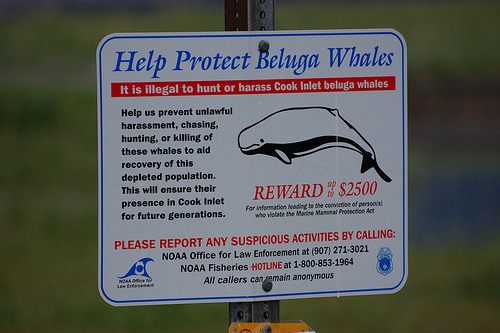 "Aquaman put up this sign. ""I'm singing the sad song of the Beluga Whale."""