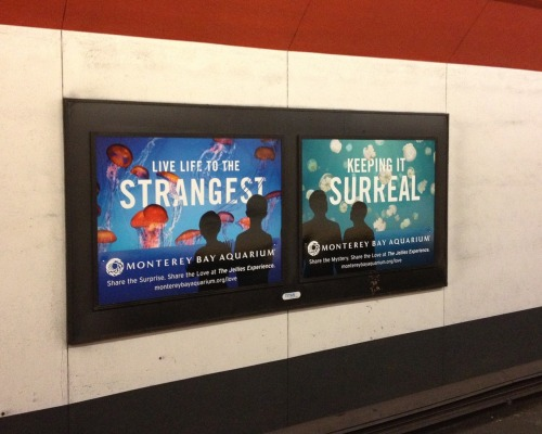 Have you seen our fun poster art in Bay Area BART stations? We hope you like it! Just keeping things surreal… Learn more!