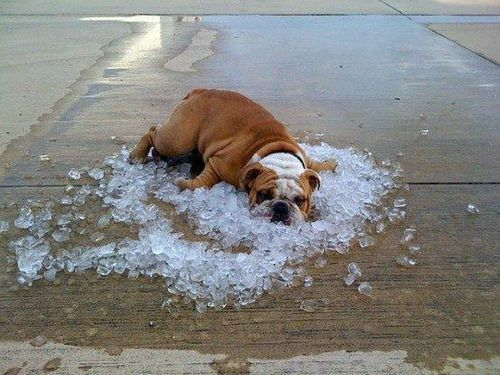 It Gets Hot in Texas - Imgur