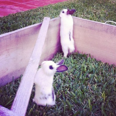isawaglow:  Stretchy #bunnies are stretchy #fuckyeahrabbits #oc #cute (Taken with Instagram)