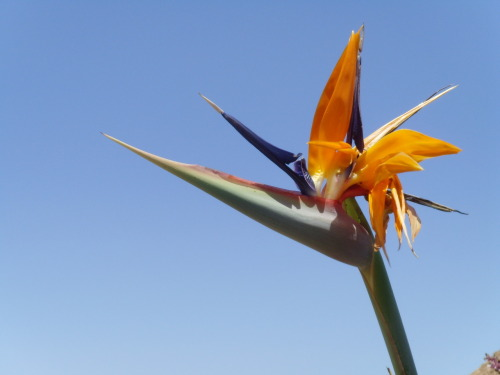 Bedtime Cactus - looks like a bird. It's superb!! Jardin de Cactus, Lanzarote 20011