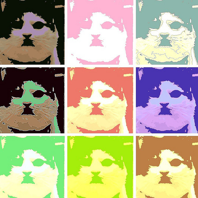 Pop Cat Photo/illustration by ©Max Thomason