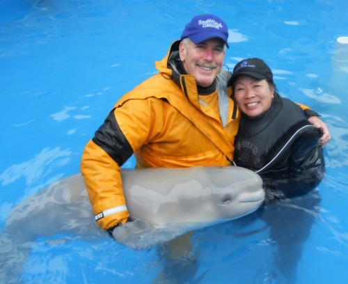 Caring for an orphaned beluga whale.