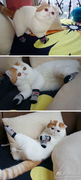A CAT WEARING SOCKS?! OH, BE STILL MY HEART :3 OH BUT SERIOUSLY, LOOK AT IT CROSSING ITS LITTLE PAWS. OH, LORDY.