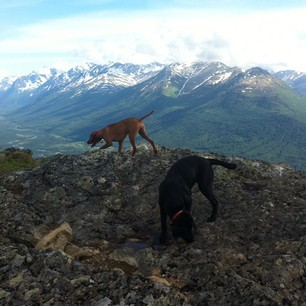 The sun finally broke out today.  #chugach   #mountains   #dogs   #alaska .  #summer