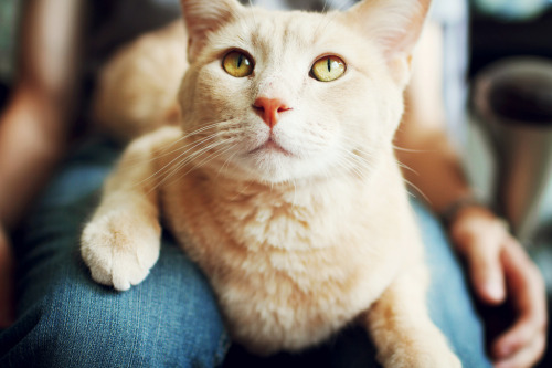 photogenicfelines:  Me (by The Three Whisketeers)