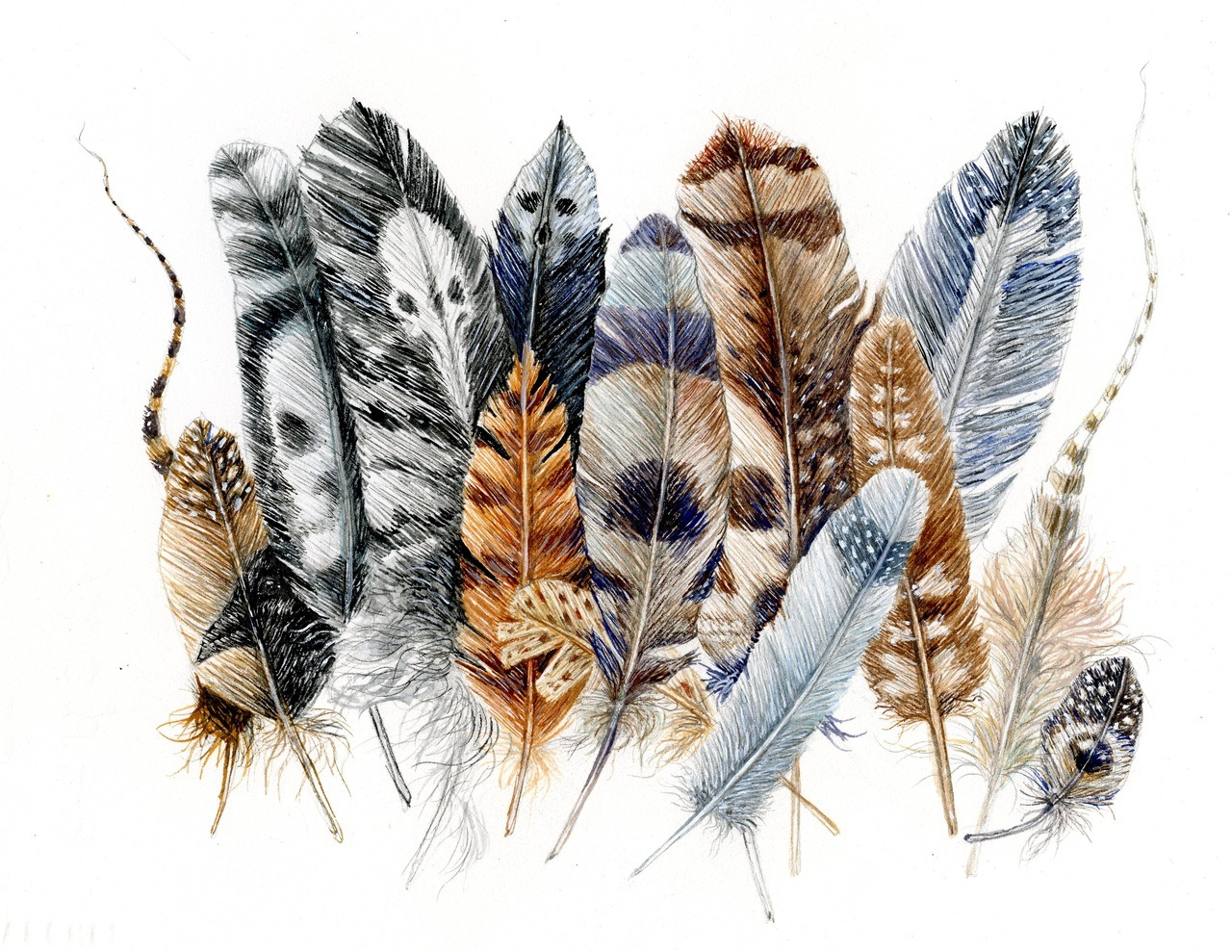 feather patterns, gouache, 2012 wendy wallin malinow inkhead