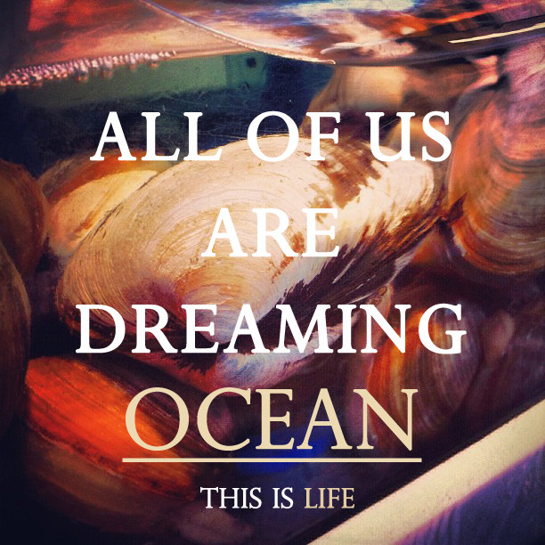we are all like shells dreaming free ocean in a limited aquarium. no.9 of 'this_is_life'. instagram : east_sea