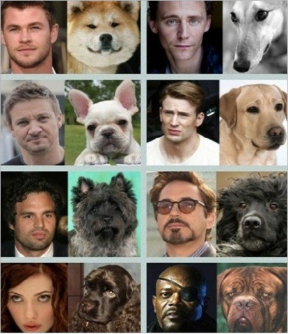 mizo-chan486:  The Avengers Cast - Dog Look-A-Like  Jeremy's is like he just took a picture of himself and put it next to his original