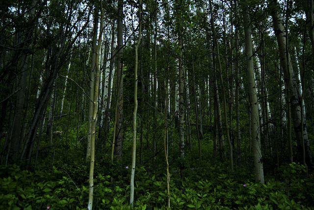 woods on Flickr. Who Knows, Alberta, Canada. Taken By Cole Weavers