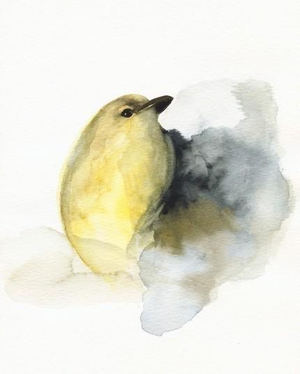 lost-not-losing:  Little Bird.