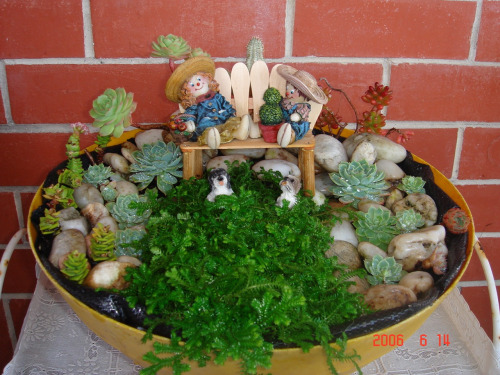 Old project: Miniature garden. Plants: moss and succulent. Bench made from Magnum ice-cream stick.
