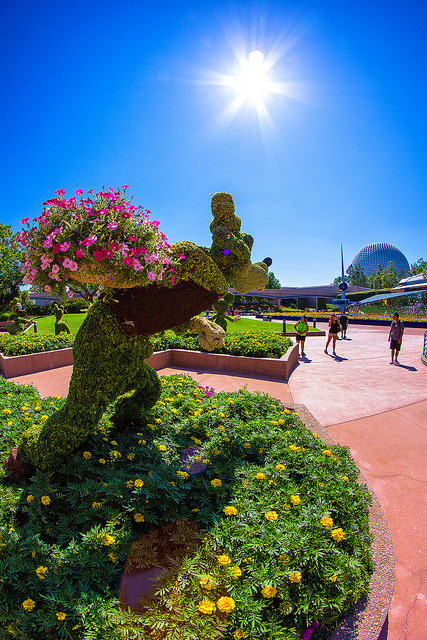 mywdw:  Hiding flowers from the sun.