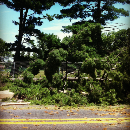 The number of downed trees is incredible. The beautiful tree-lined Landon has several down.